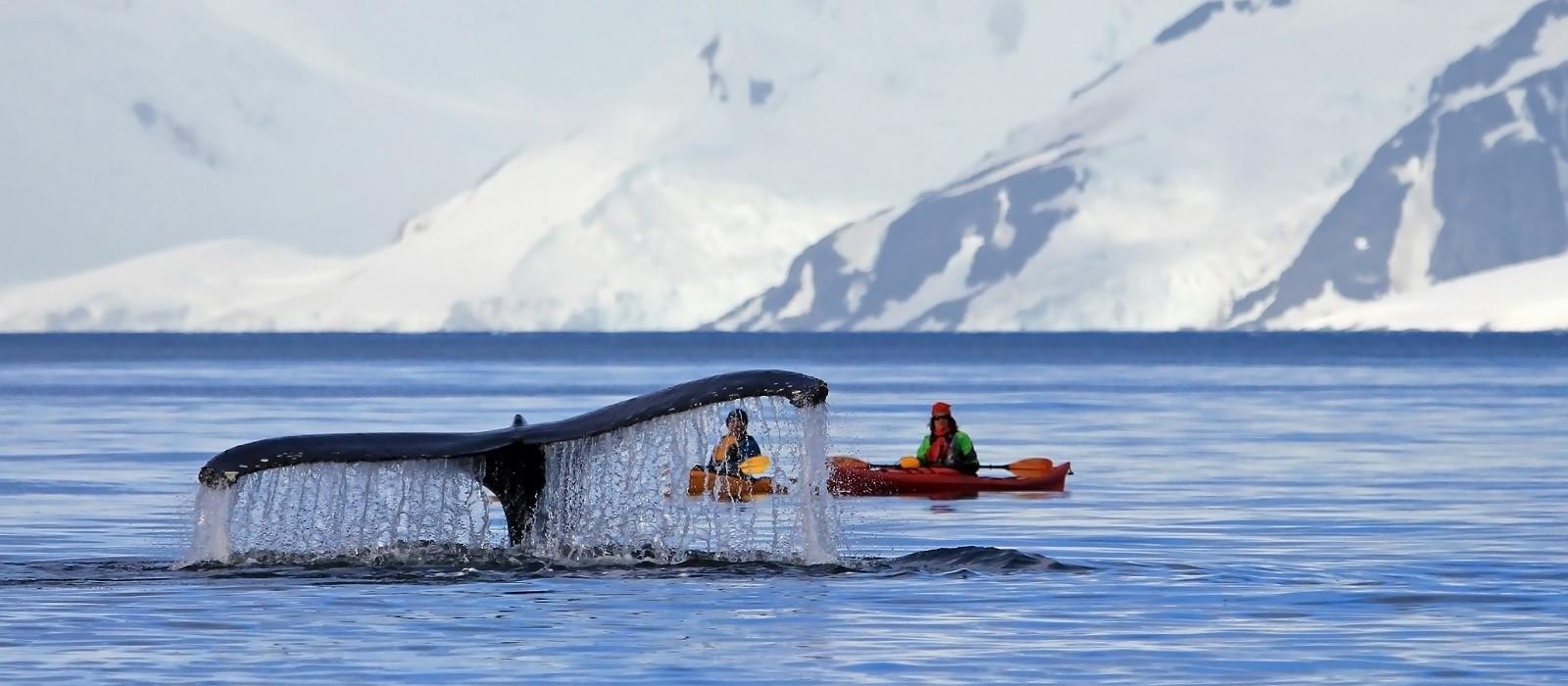 Destination Antarctica Cruises Antarctica
