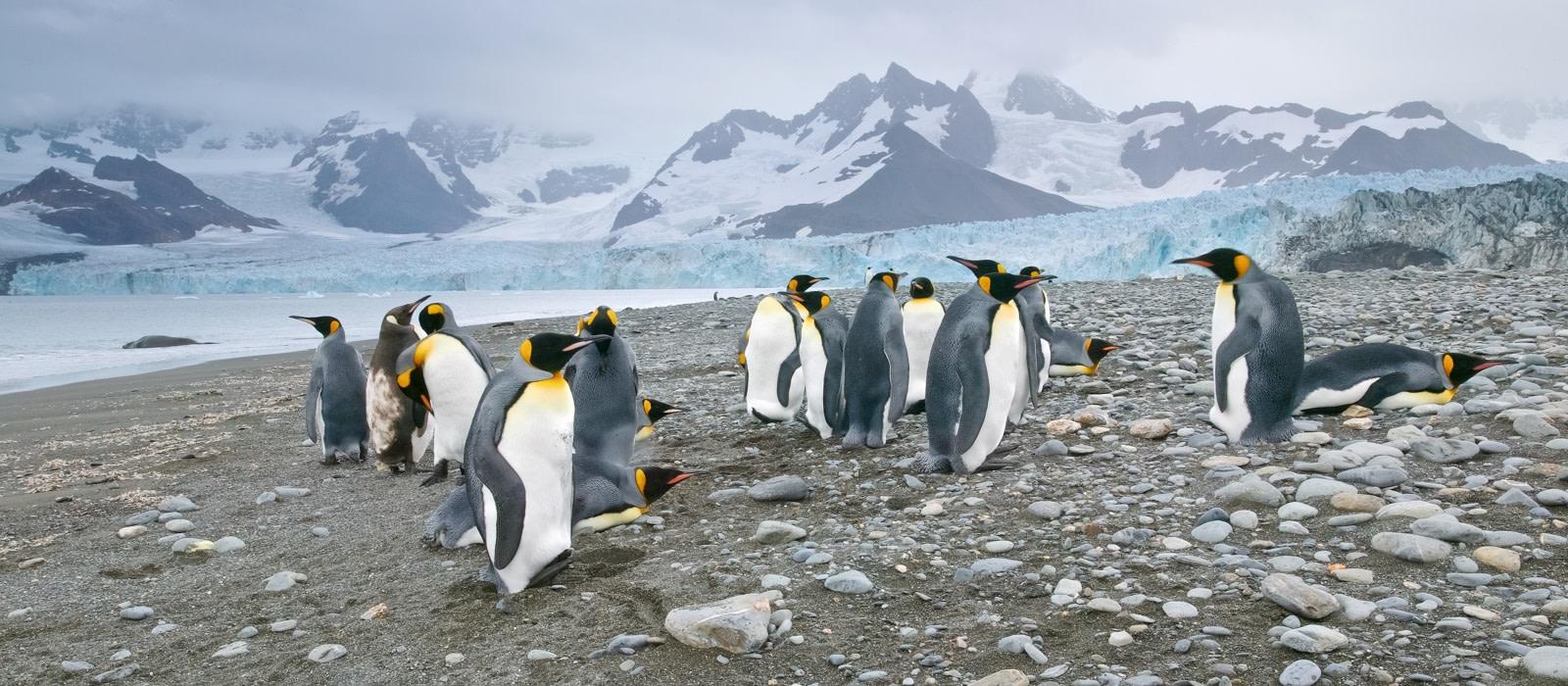 Penguin Safari: South Georgia and Antarctic Peninsula Tour Trip 1