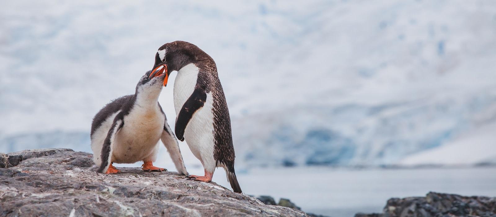 Argentinien und Antarktis Kreuzfahrt – feuriger Tango und glitzernde Gletscher Urlaub 1