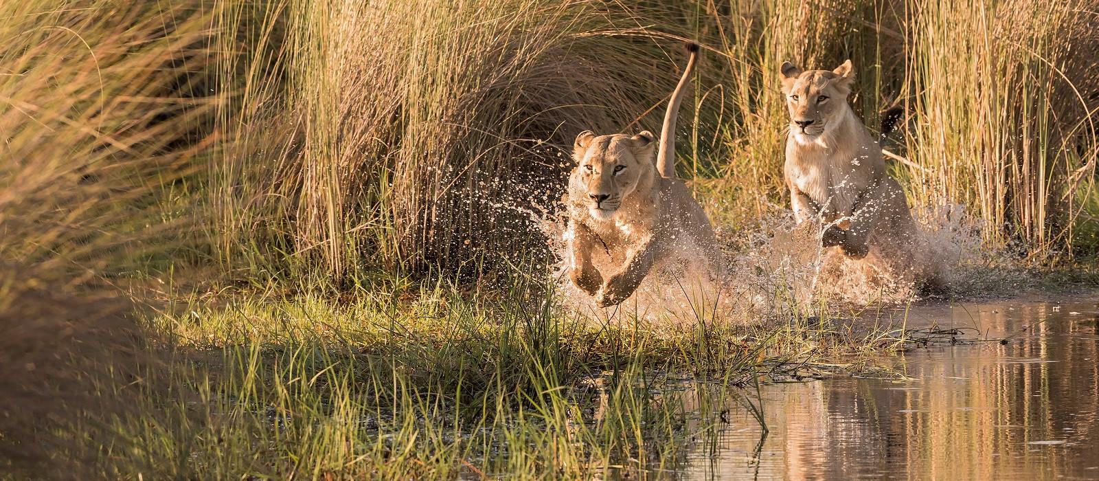Highlights des südlichen Afrika – vom Okavango Delta bis zu den Victoriafällen Urlaub 1