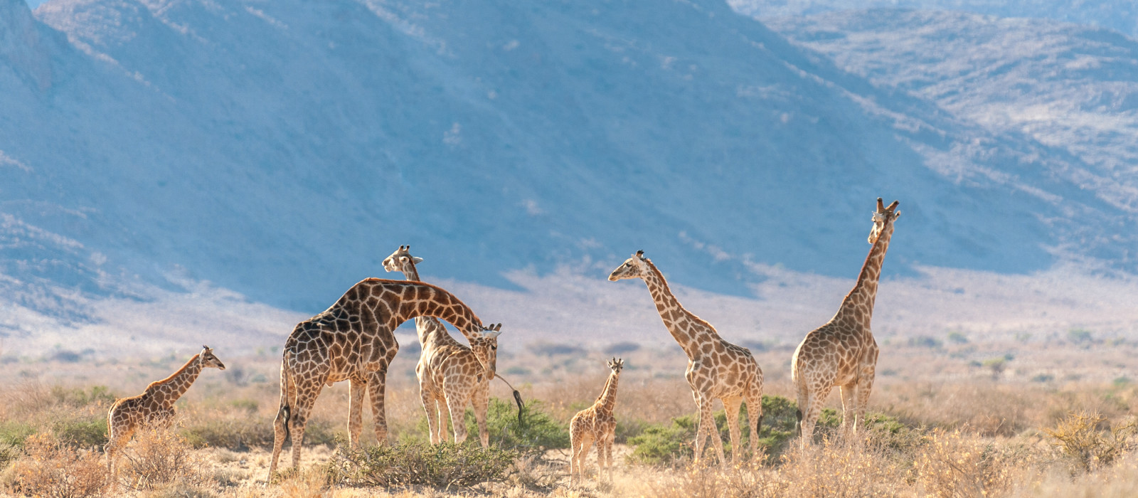 Namibia and South Africa: Highlights of the South Tour Trip 1