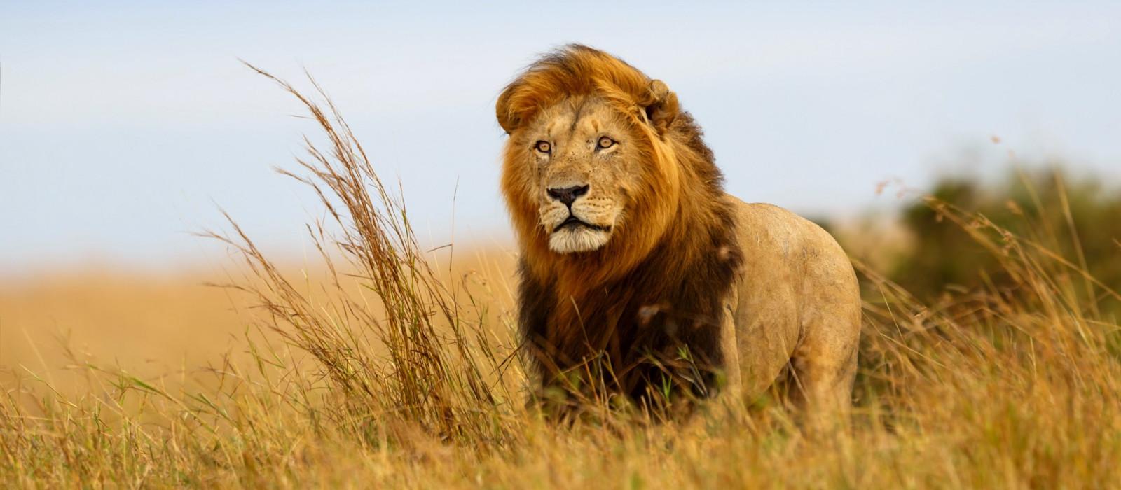 Hoch über Kenia: Safari & Strand Urlaub 1