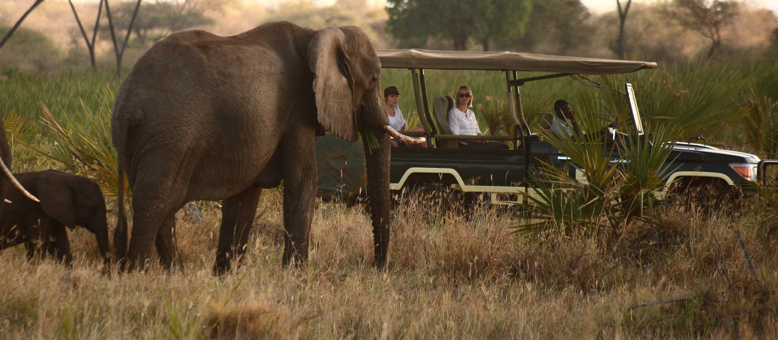 Wings over Kenya: Safari and Beach Tour Trip 1