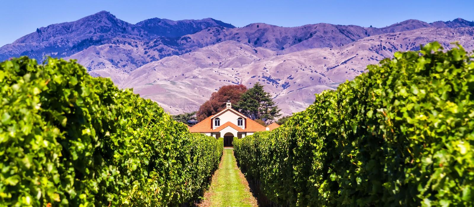 Neuseeland: Kunst, Wein und Strand Urlaub 1