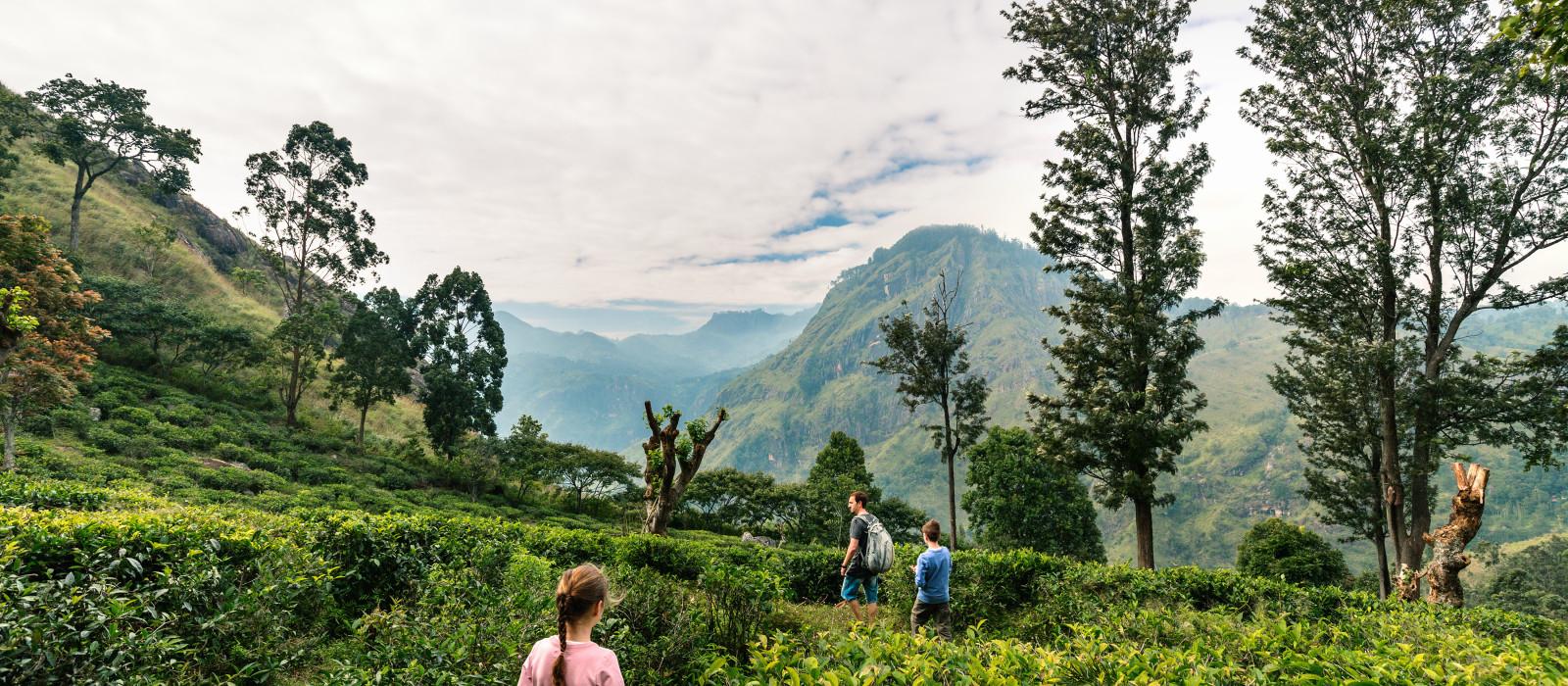Sri Lanka – Teetradition, koloniale Schätze und Strände Urlaub 1