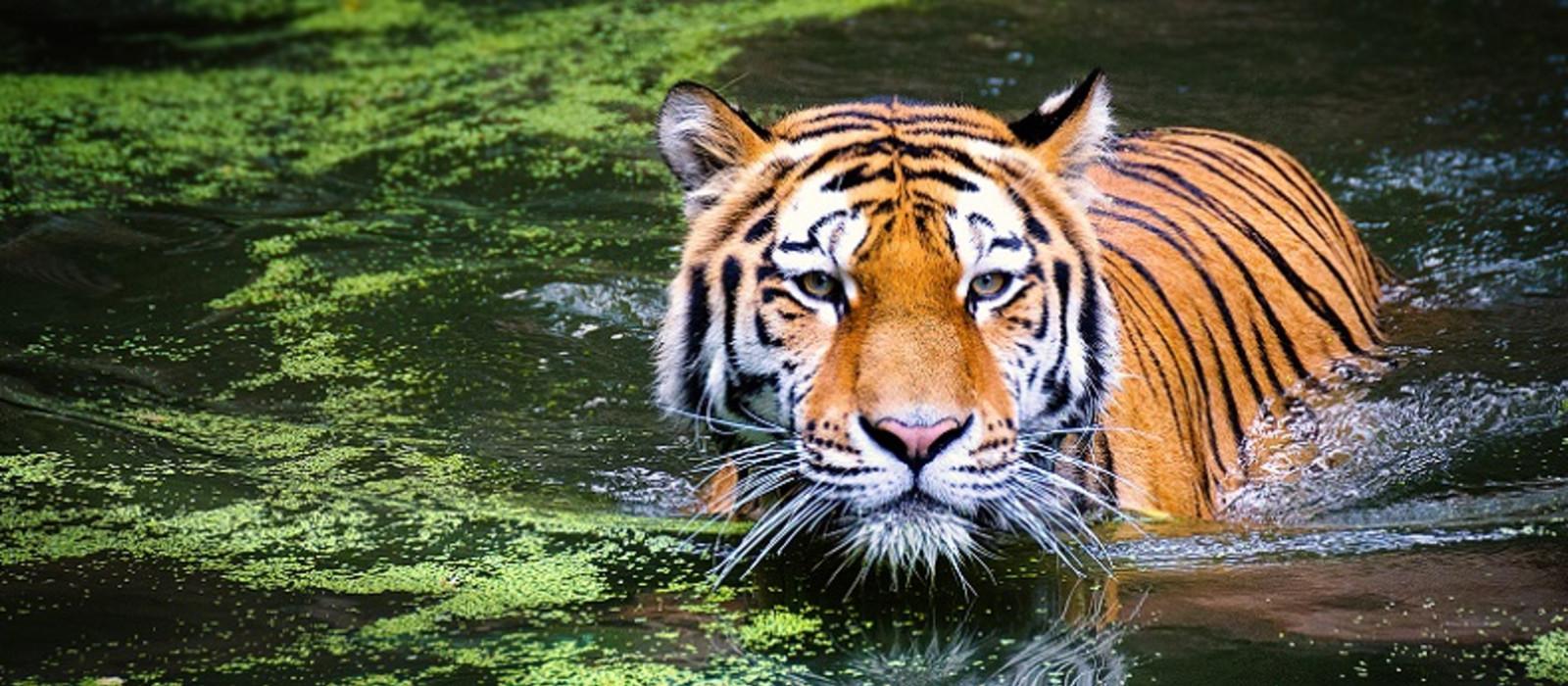 Gujarat and Rajasthan: Heritage and Wildlife Tour Trip 1