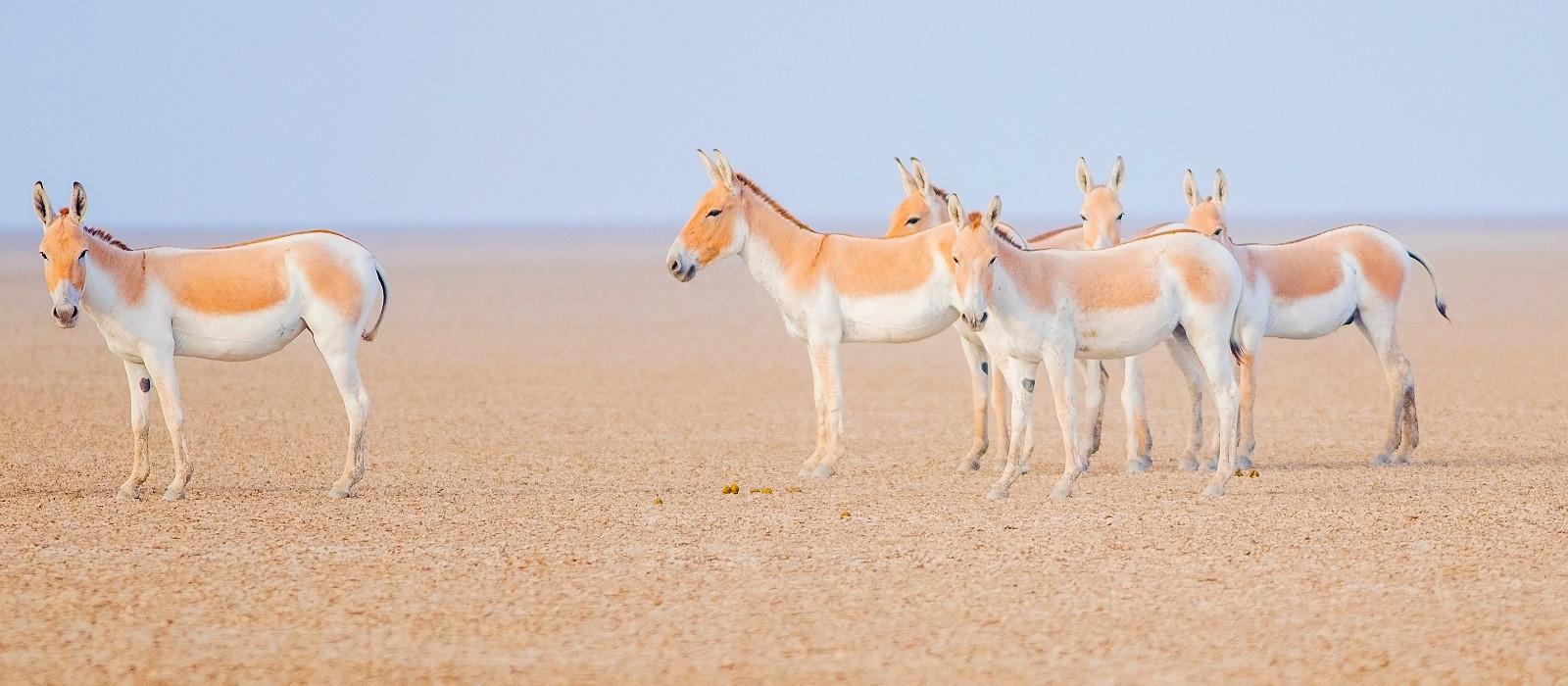 Gujarat's Historic Gems and Wildlife Tour Trip 1