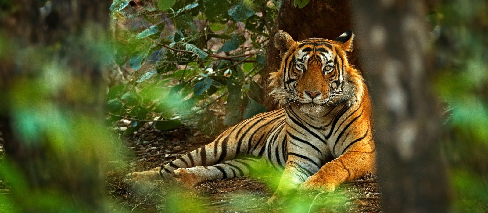 Tiger Safari in India and the Taj Mahal Tour Trip 1