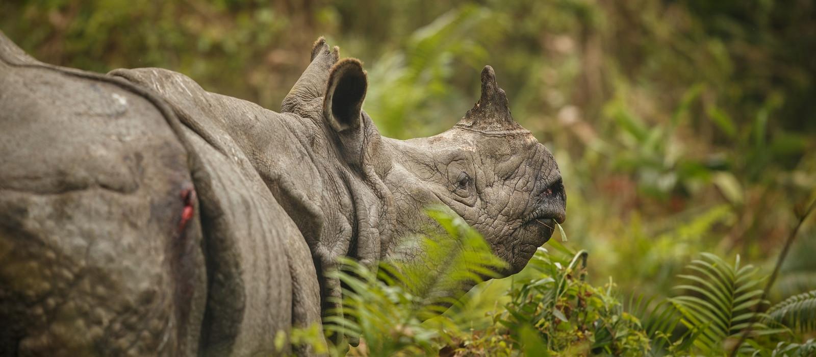 Unbekanntes Ostindien – Legenden, wilde Tiere und Flusskreuzfahrt Urlaub 1
