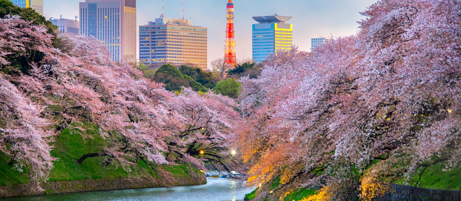 Japan für Einsteiger – Tokio, Fuji & Kyoto Urlaub 1
