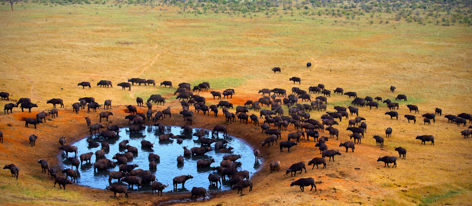 Kenia luxuriös: Wander-Safari, Strand & traumhafte Lodges Urlaub 1