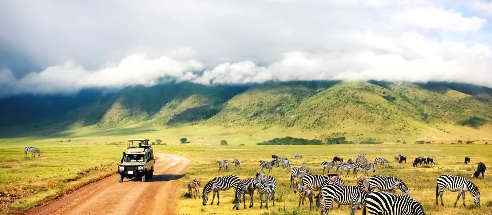 Ostafrika Safari – Gorilla Trekking in Uganda & Big 5 in Kenia und Tansania Urlaub 1