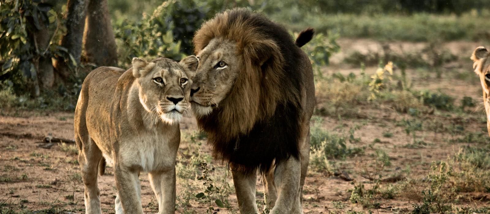 South Africa Safari Magic Tour Trip 1