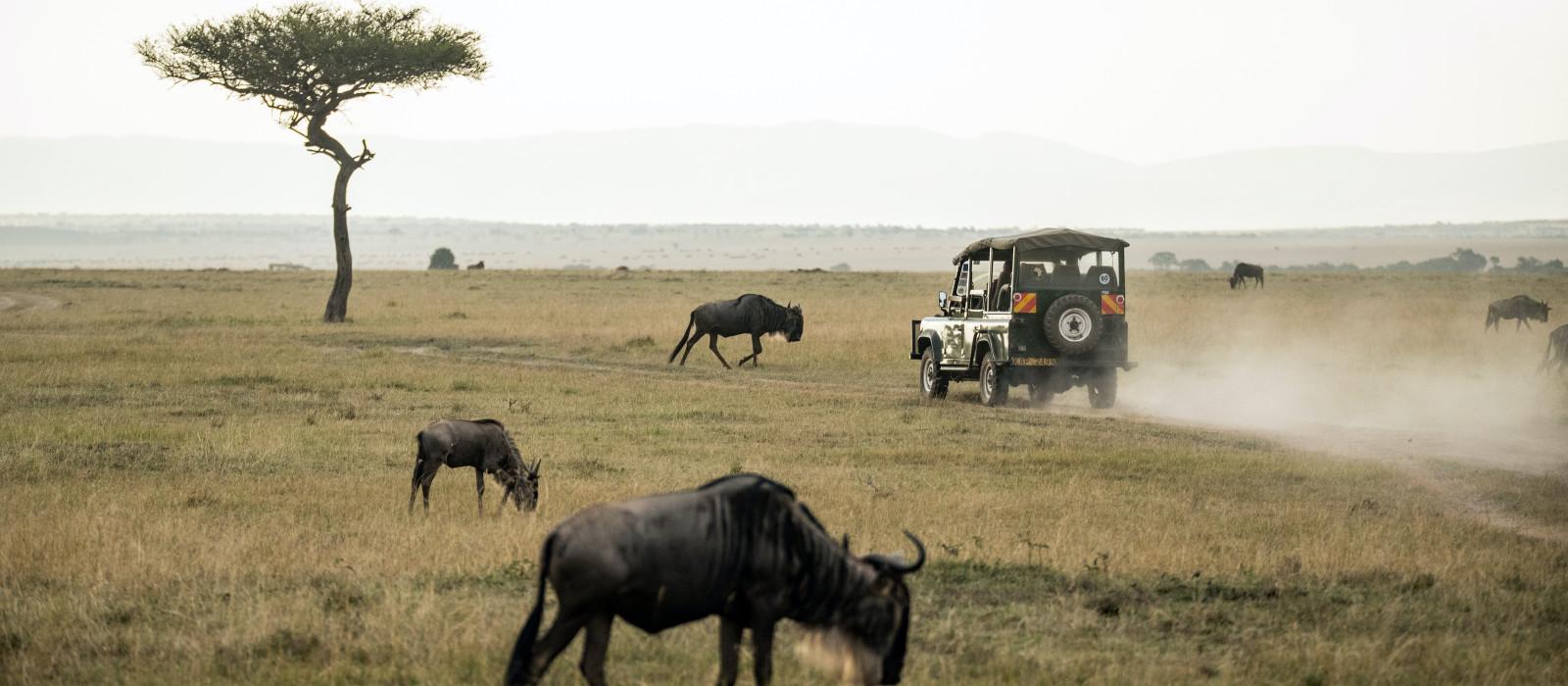 Ostafrika Safari – Gorilla Trekking in Uganda und Big 5 in Kenia und Tansania Urlaub 1