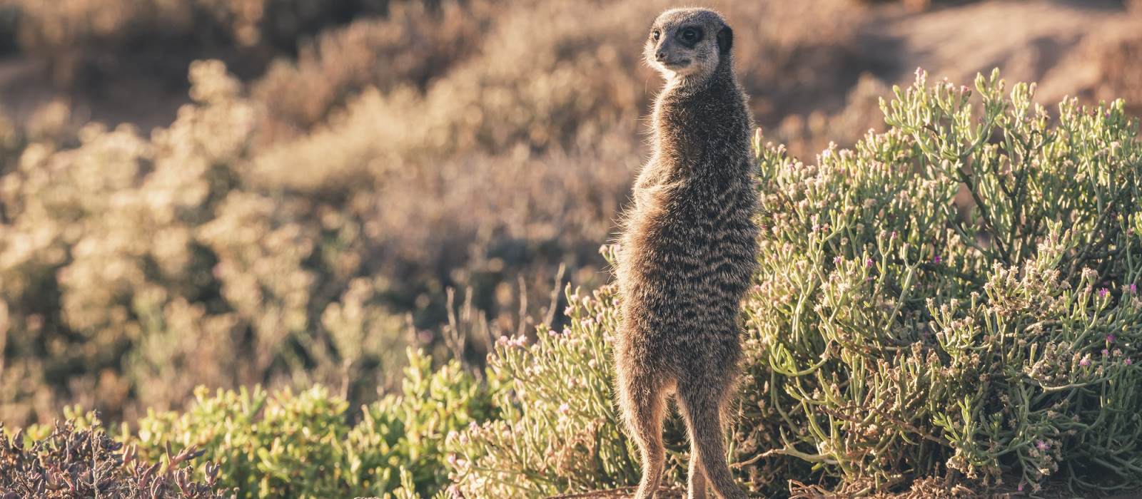 South Africa and Lesotho: Landscapes and Wildlife Tour Trip 1