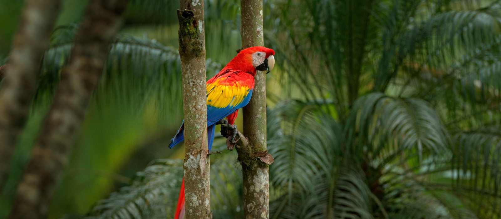Costa Rica and Panama: Nature and Wildlife Tour Trip 1