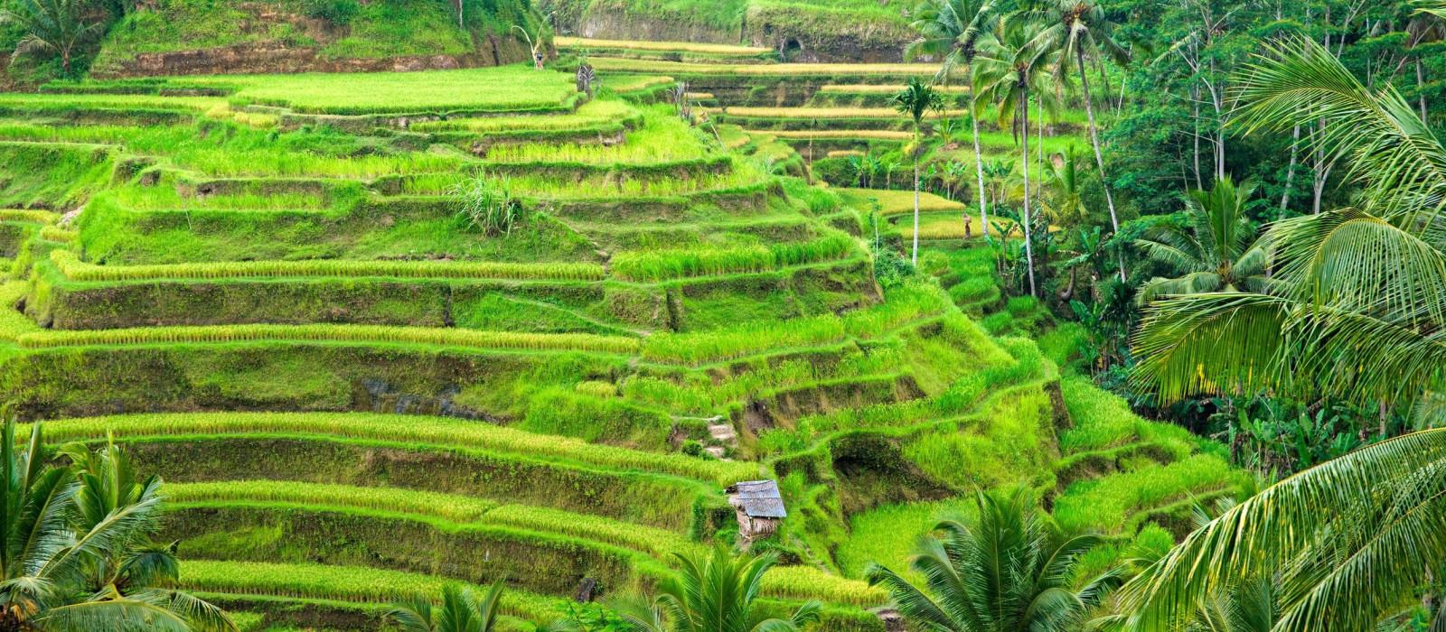 Bali & Java: Vulkane, Tempel & Korallengärten Urlaub 1