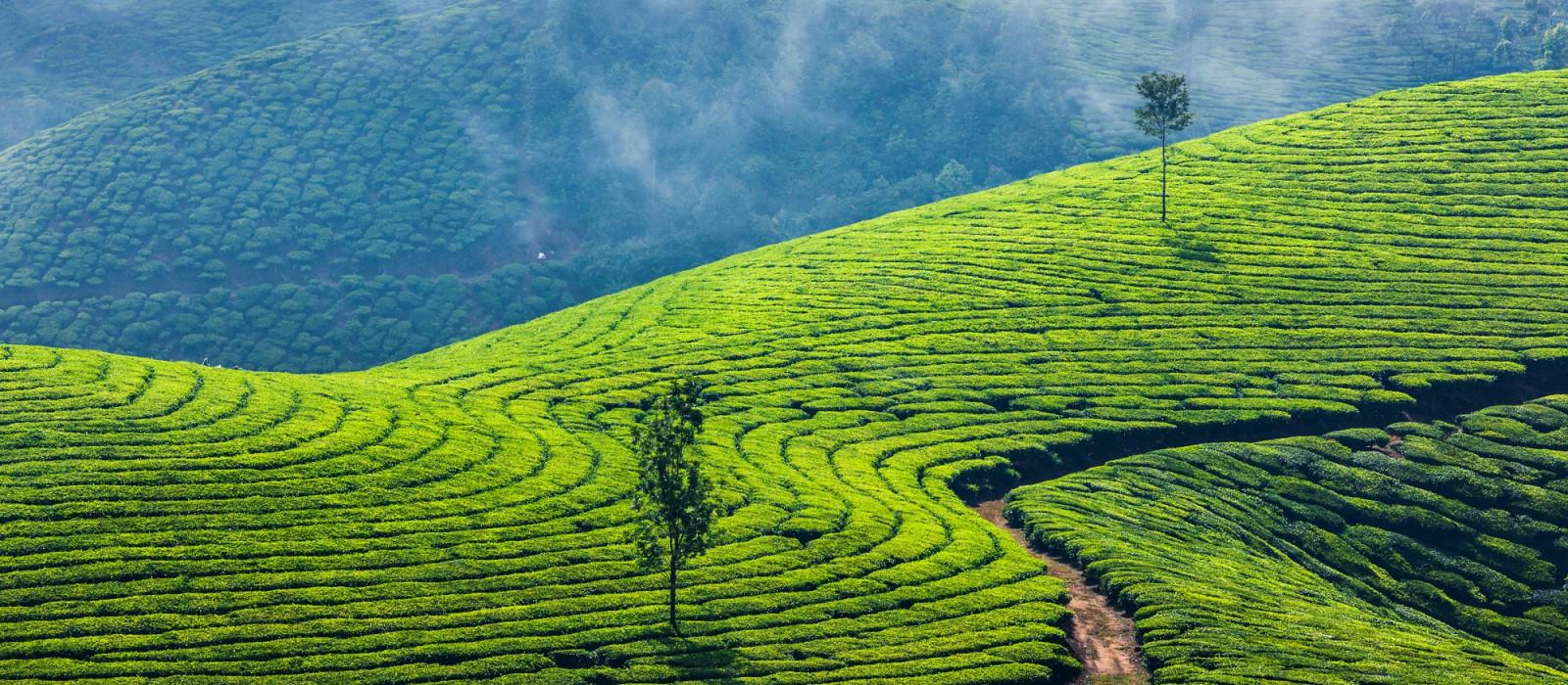 Stilvoll in Südindien: Tempelstädte, Königstiger & majestätische Landschaften Urlaub 1