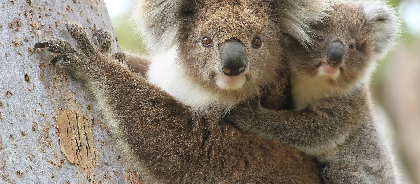 Road Trip: Australian Cities, Nature and Beaches Tour Trip 1