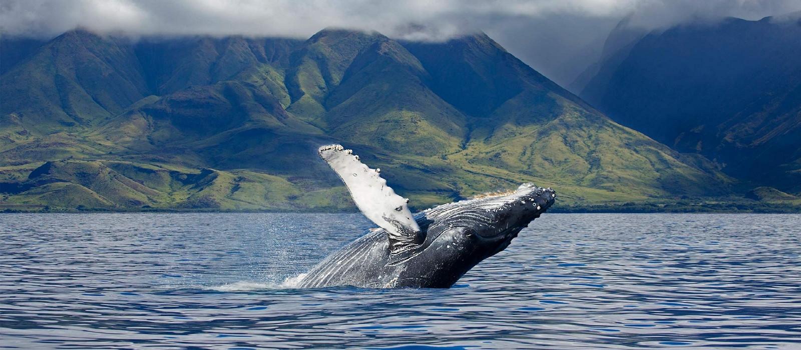 Hawaii: Volcanoes, Beach and History Tour Trip 1