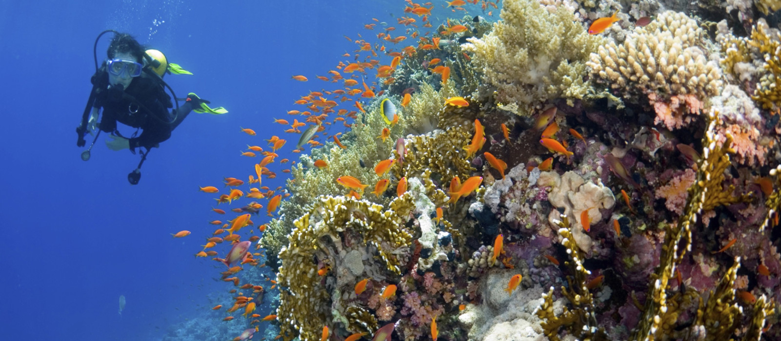 Road Trip: New Zealand and Fiji Explorer Tour Trip 1