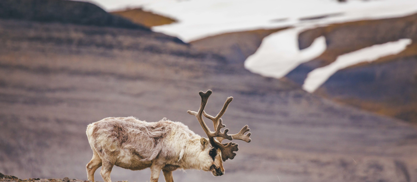 Spitsbergen Explorer: Wildlife Capital of the Arctic Tour Trip 1