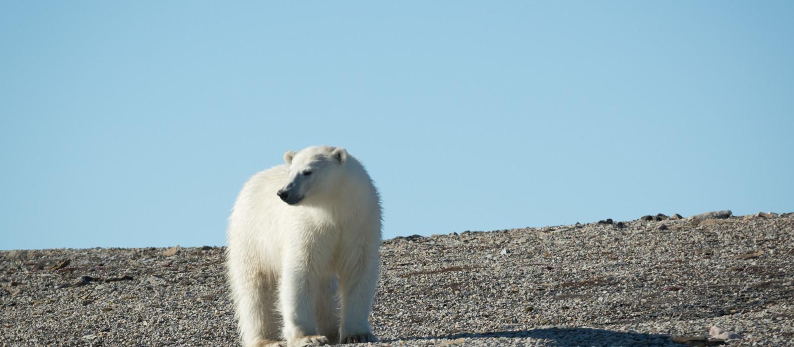 Spitzbergen – große Inseln, große Abenteuer Urlaub 1