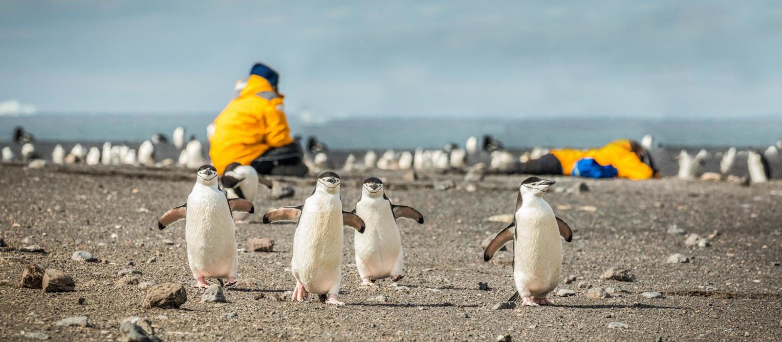 Antarktis – willkommen auf dem 7. Kontinent mit Kap Hoorn und Diego-Ramirez-Inseln Urlaub 1