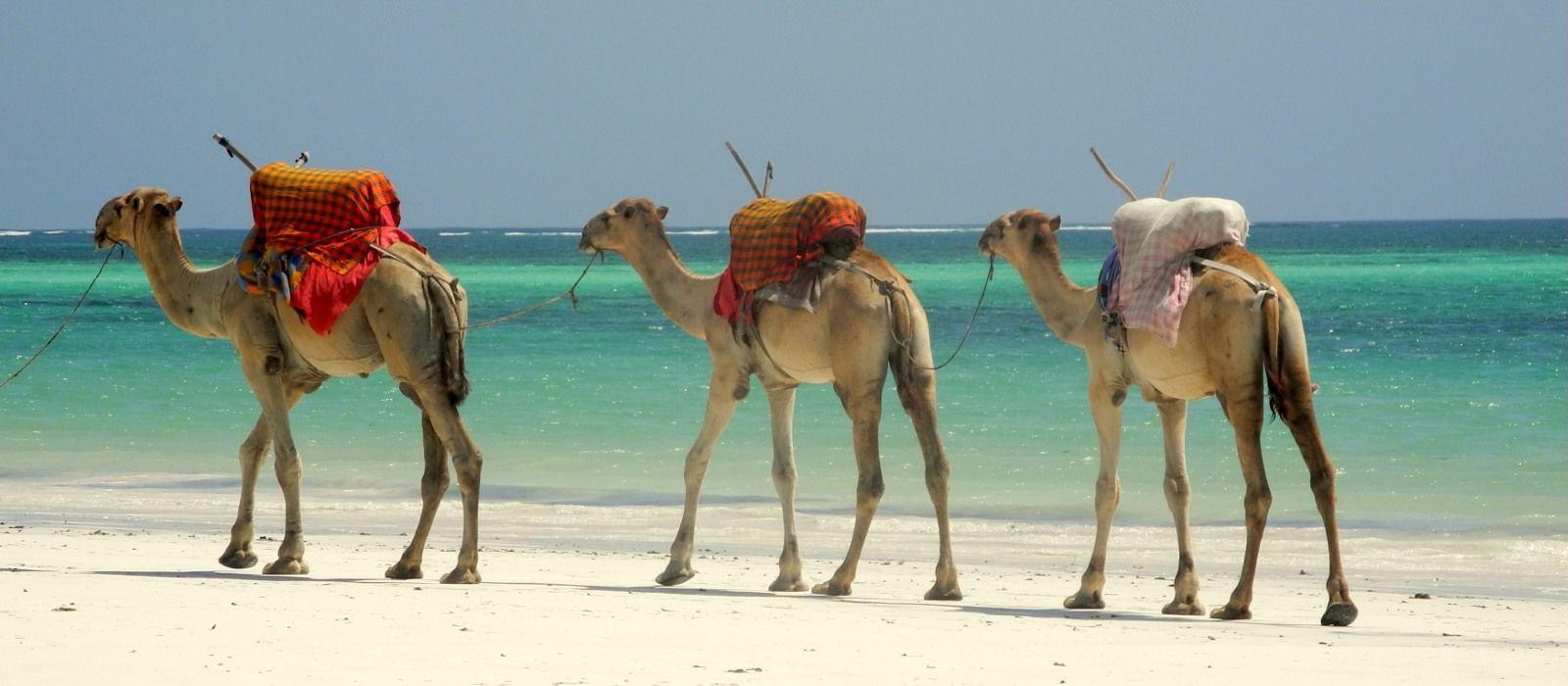 Destination North Coast Kenya
