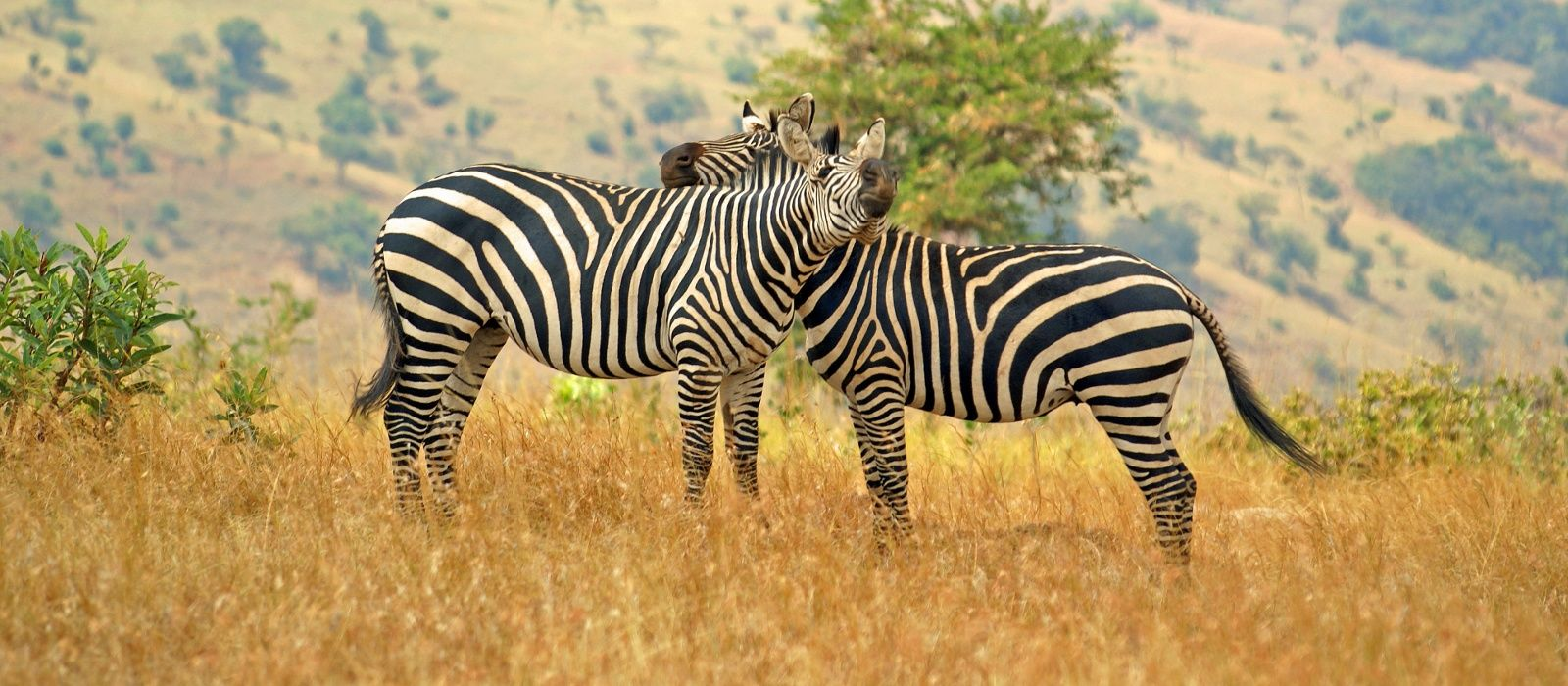 Reiseziel Akagera Ruanda