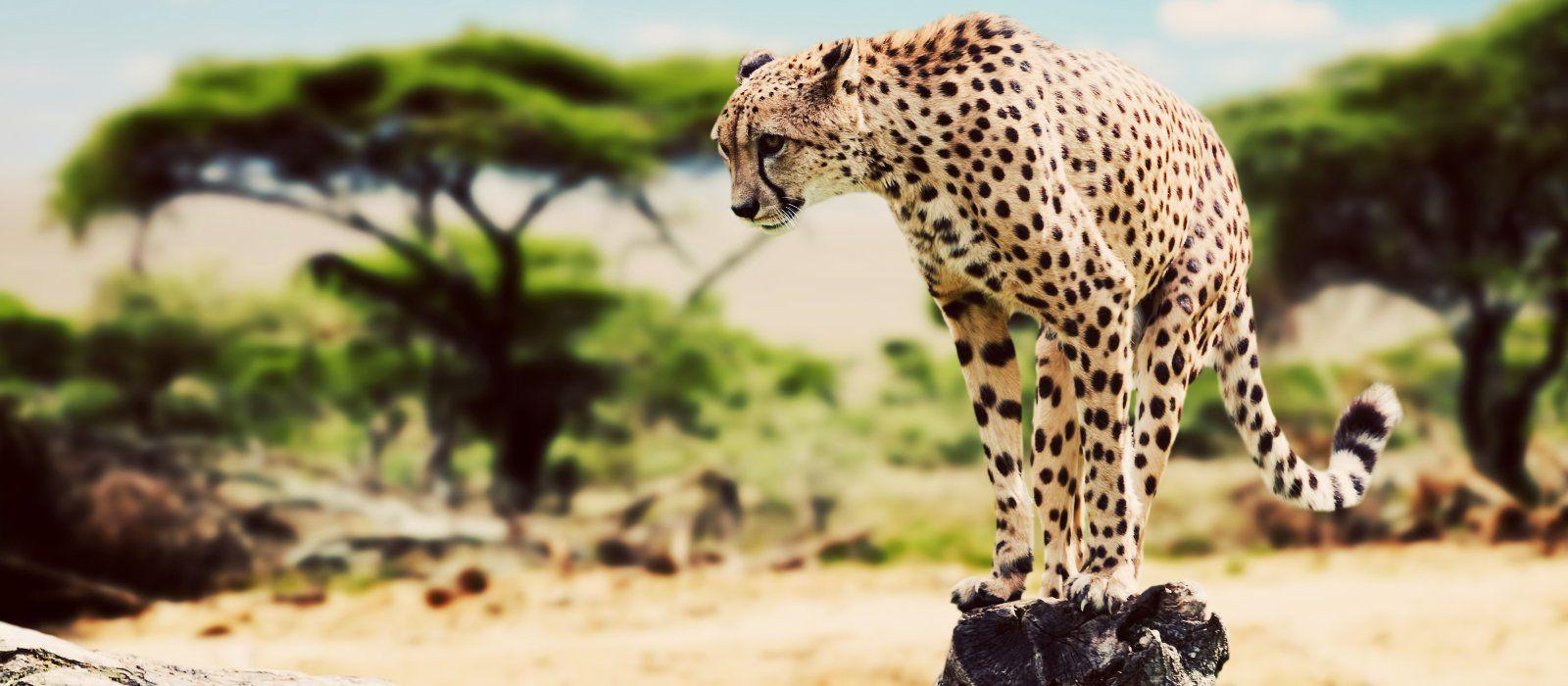 Tansania und Ruanda: Gorilla-Trekking, Safari und Viktoriasee Urlaub 6