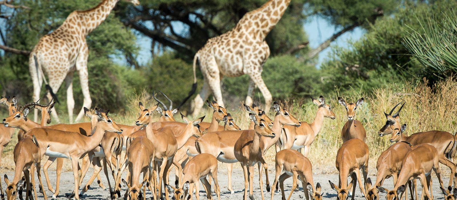 Hotel Little Mombo Botswana