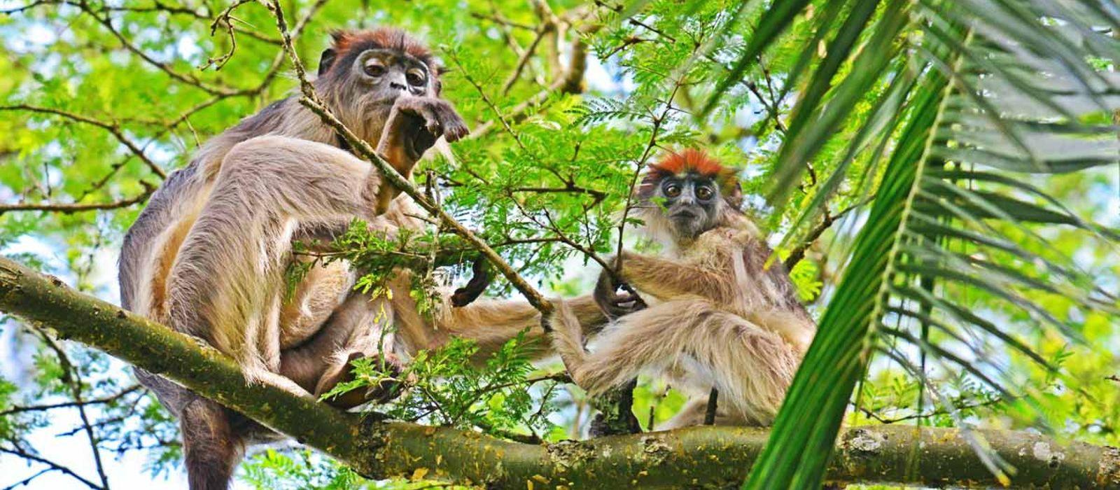 Hotel Kibale Primate Lodge Uganda