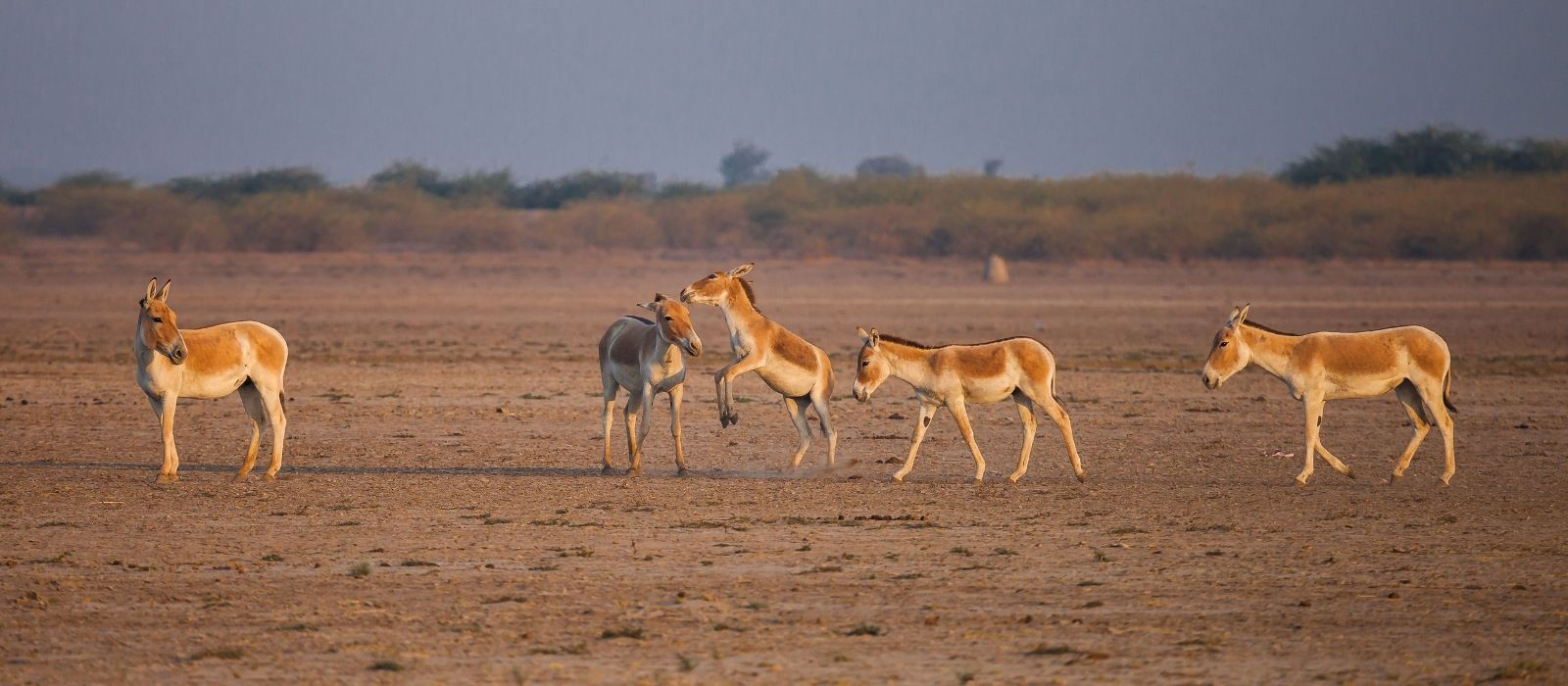 Destination Rann of Kutch Central & West India