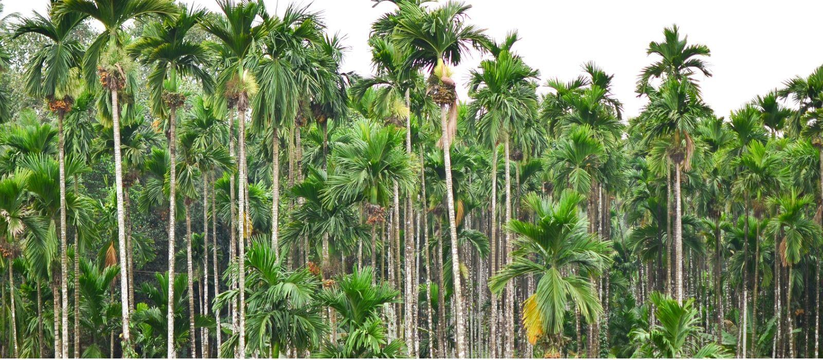Reiseziel Mangalore Südindien