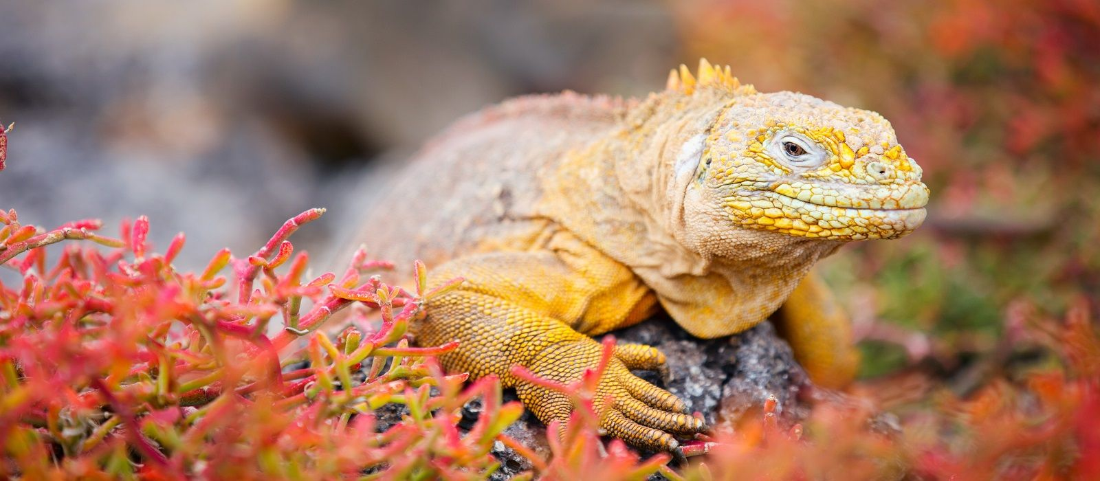 Ecuador & Galapagos Tours & Trips 1
