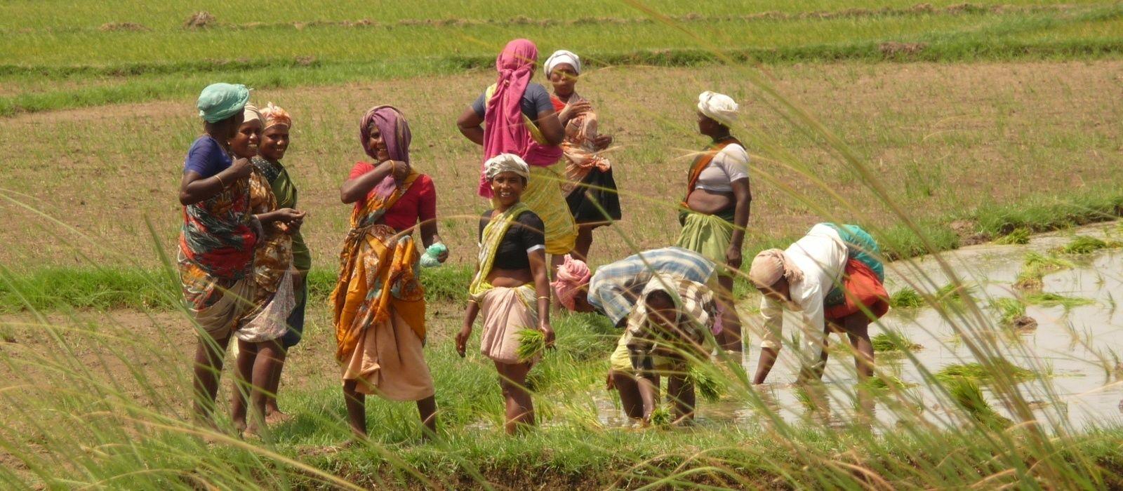 Südindien: Tempel & Hausboot Urlaub 3