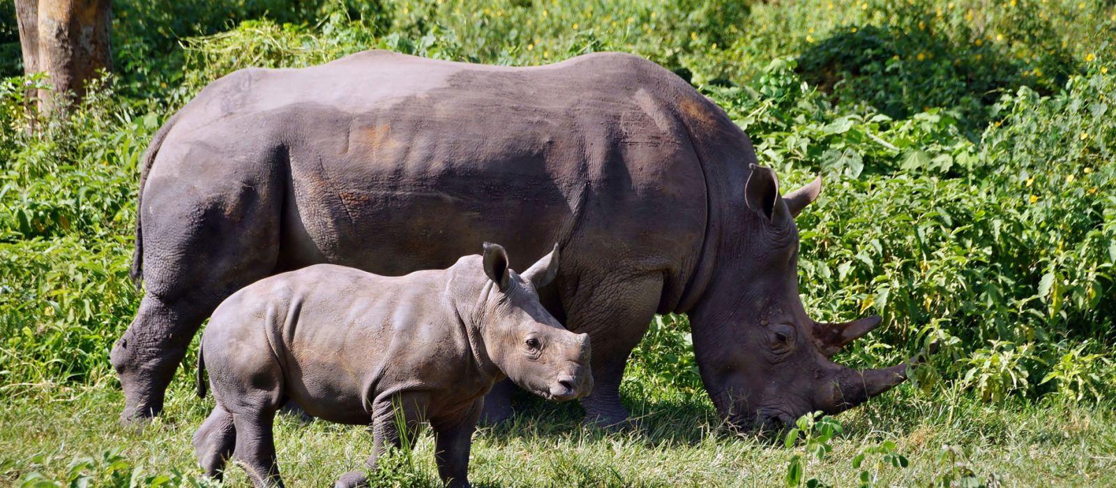 Destination Ziwa Rhino Sanctuary Uganda