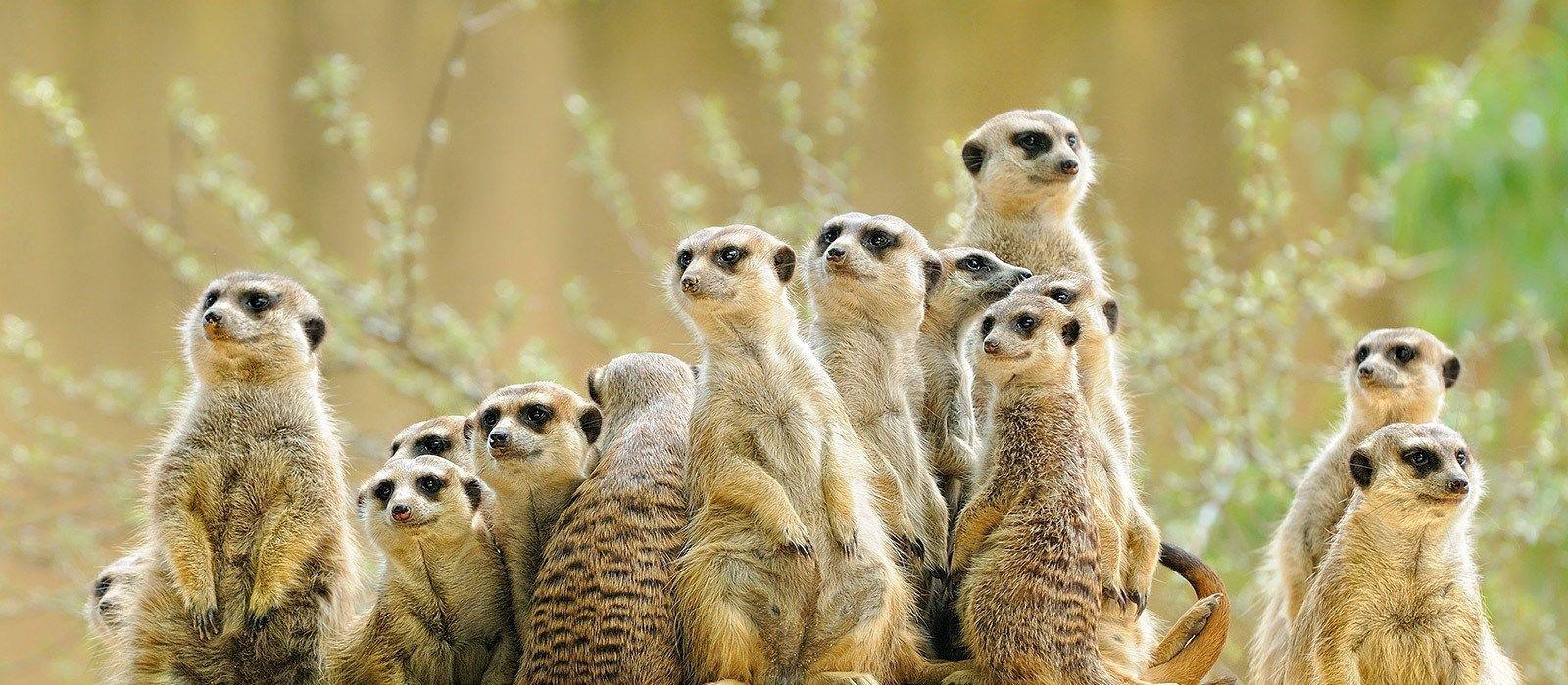 Reiseziel Kalahari Salzpfannen Botswana