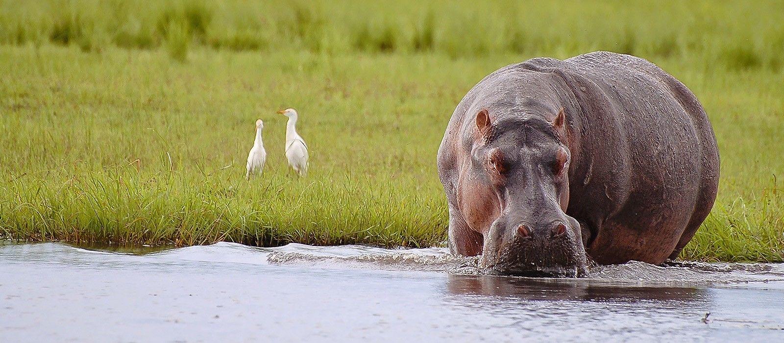 Botswana: Abenteuerreise ins Land der Kontraste Urlaub 3