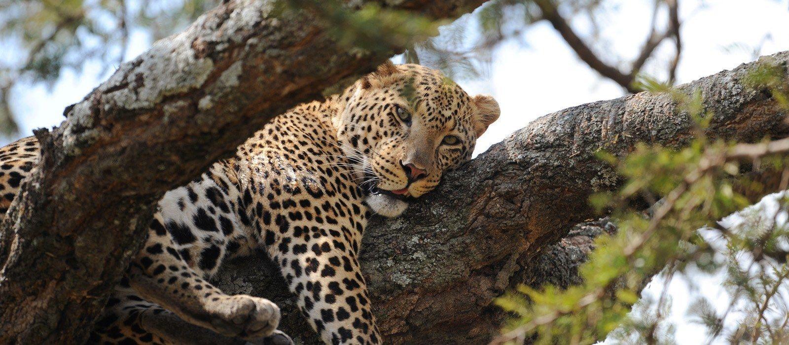 Destination Serengeti (Northern) Tanzania