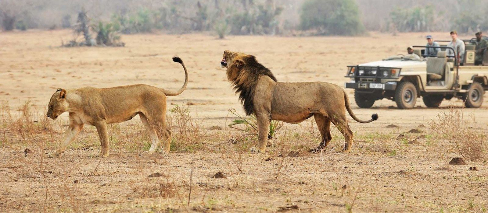 Tansania: Wahre Wildnis, unberührtes Juwel & Inselparadies Urlaub 2