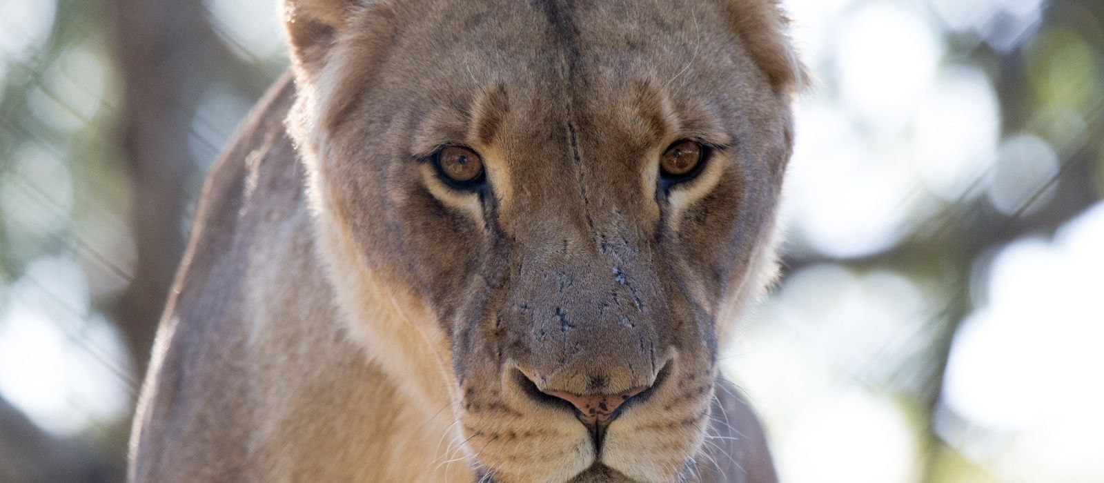 Simbabwe: Klassische Safari Rundreise Urlaub 3