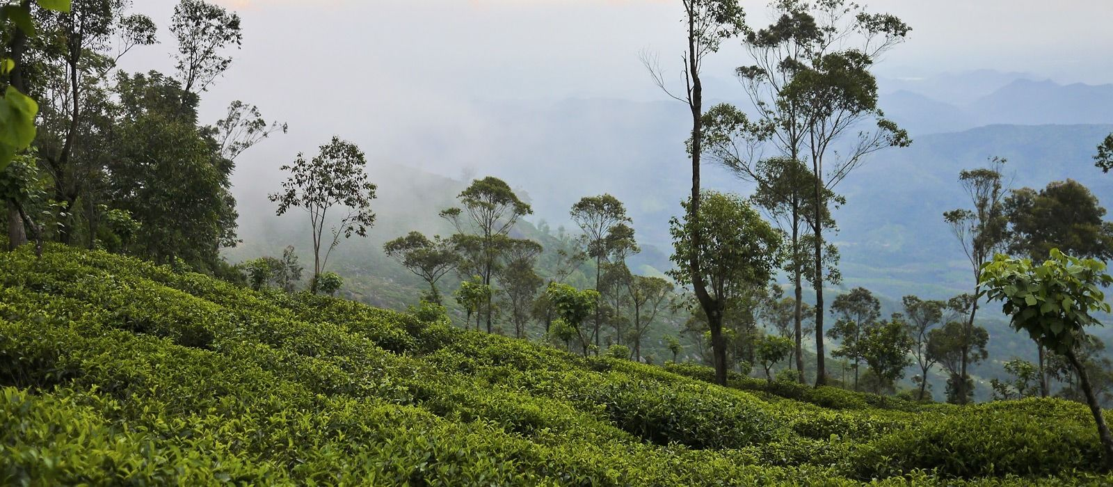 Reiseziel Hatton Sri Lanka