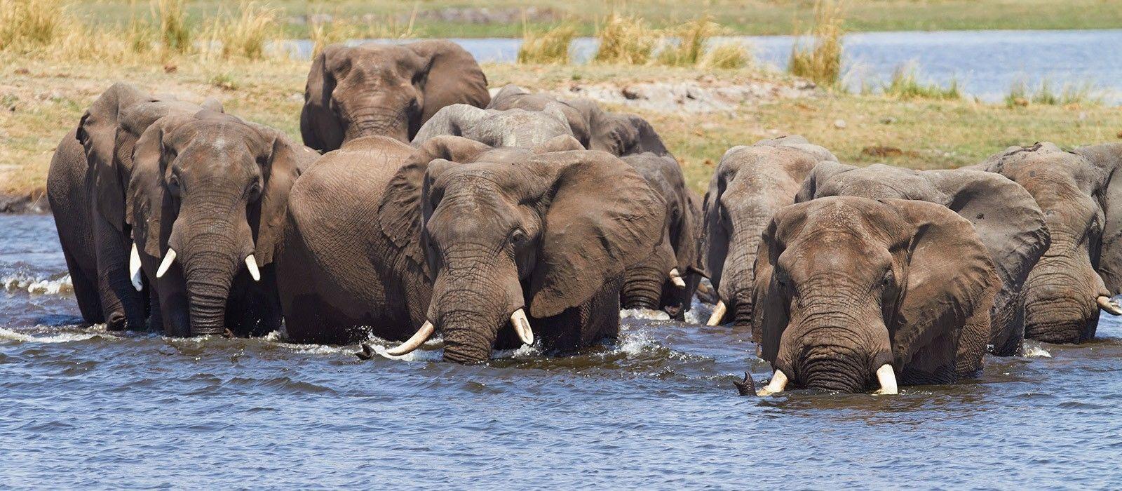 Botswana & Simbabwe hautnah: Viktoriafälle, Chobe & Okavango Delta Urlaub 1