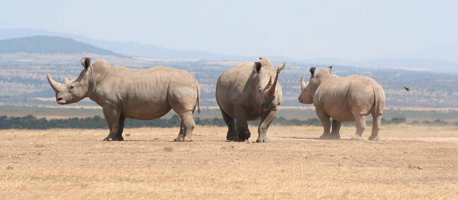 Kenia und Tansania: Kamel Trekking und Strandurlaub Urlaub 1