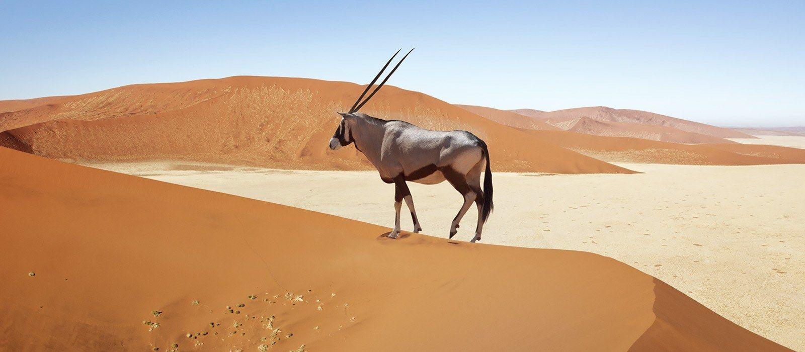 Classic Namibia Luxury Safari Tour Trip 2