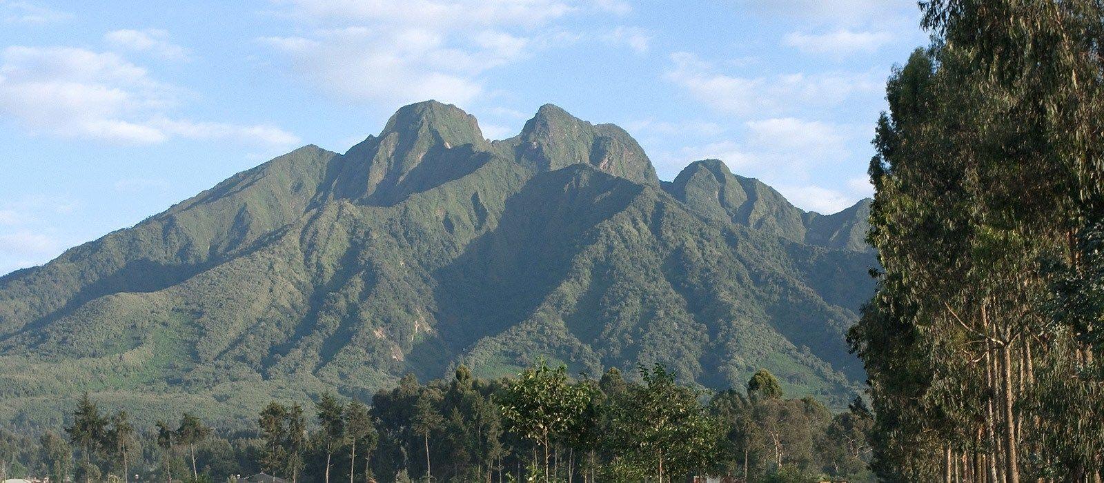 Gorilla Trekking in Ruanda Urlaub 2