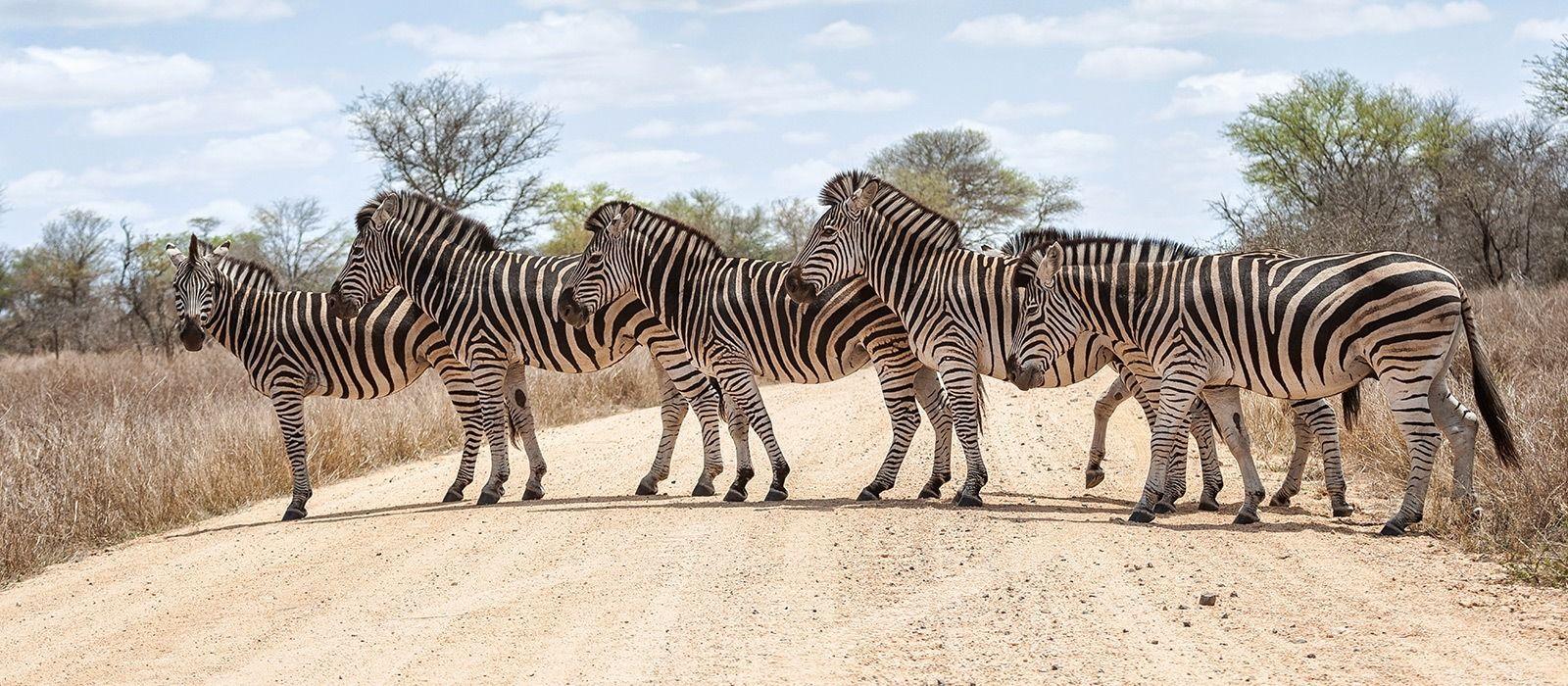 Südafrika & Sambia: Kapstadt, Krüger und Victoriafälle Urlaub 2