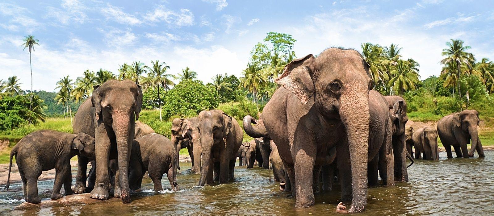 Luxuriös und hautnah – Große Sri Lanka Rundreise Urlaub 4